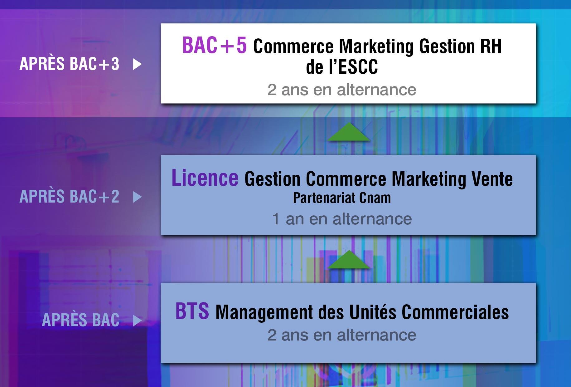 ESCC-Cursus-ESCC-schema