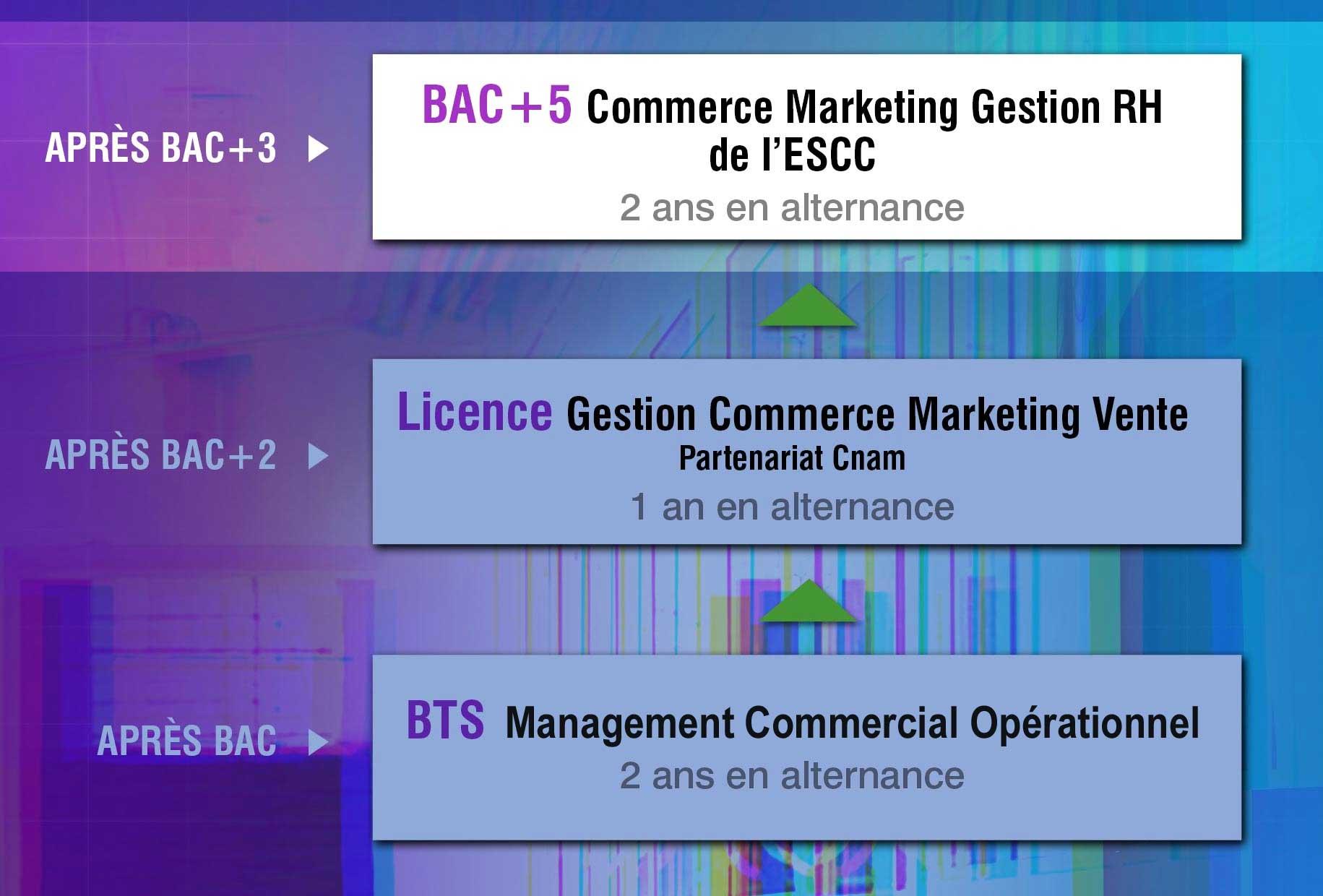ESCC-Cursus-ESCC-schema-updated