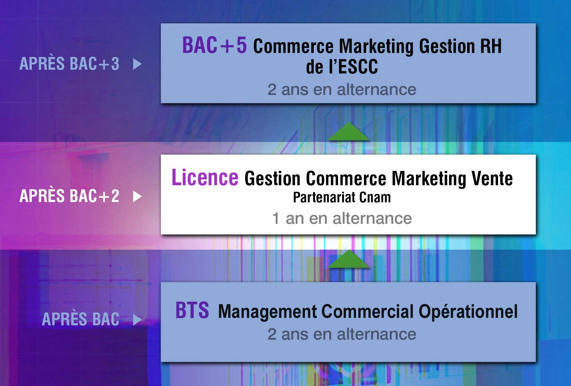 ESCC-Cursus-Licence-schema-updated
